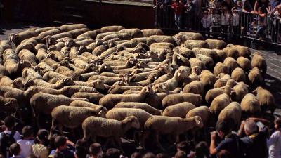 Transhumance pecore