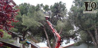 abbattimento-pino-Viale-Leopoldo-Muzii-Pescara