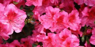 rododentro