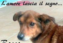 Rocco LNDC