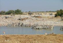 Visita IZSAM Africa