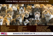 colonie-feline-locandina