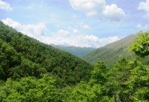 Foresta Vetusta della Val Cervara