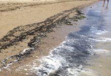 Cologna spiaggia ripascimento