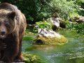 sorgenti e orso
