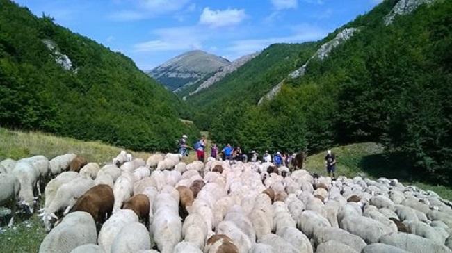 transumanza in abruzzo trek a passo di pecora