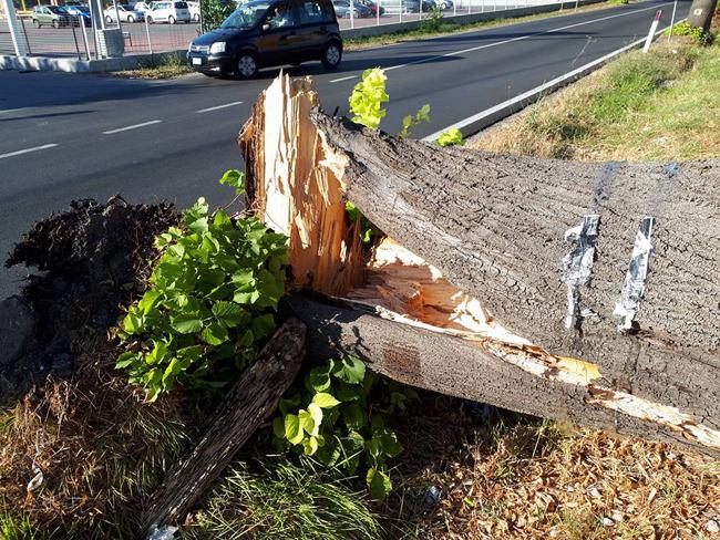 alberi caduti a Brecciarola e Manoppello