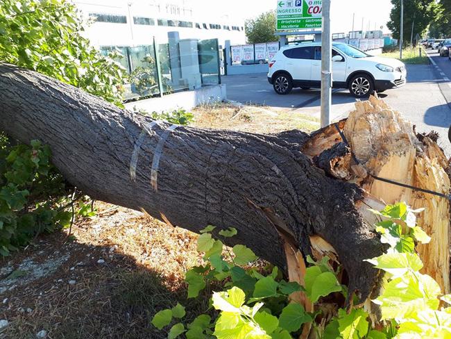 alberi caduti nel pescarese