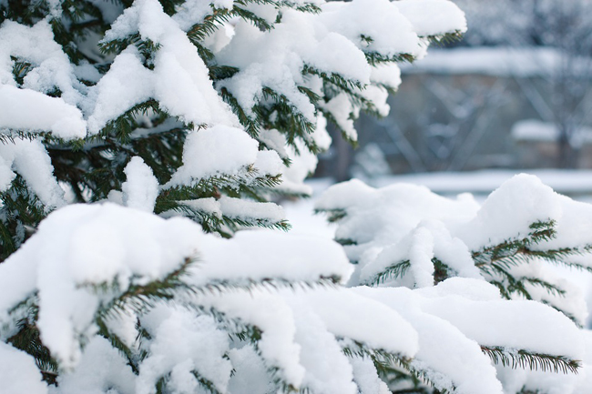 neve albero