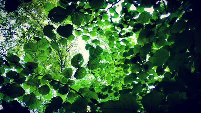 ombra alberi
