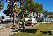 potatura alberi Montesilvano 2