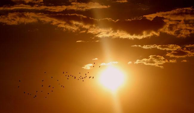 sole volo uccelli