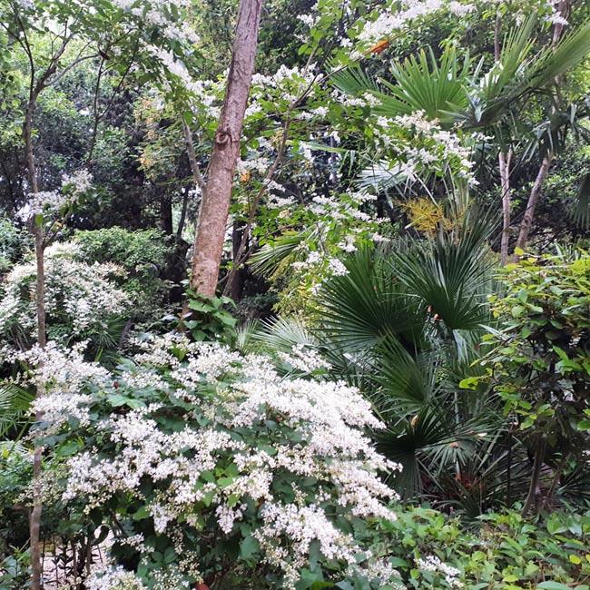 parco botanico Ligustri