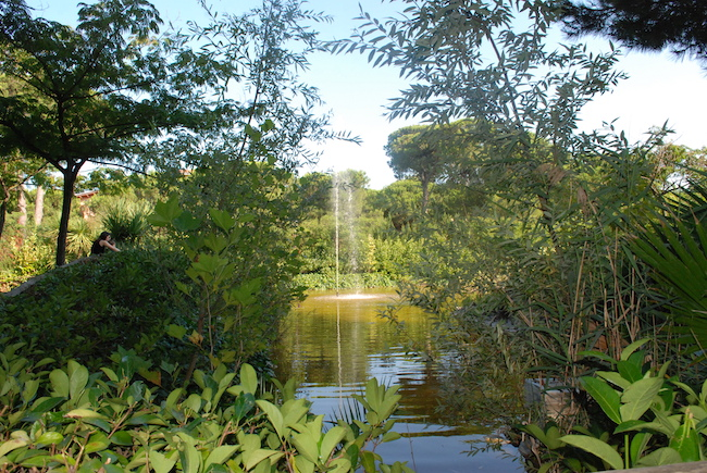 primo giardino uccelli Montesilvano