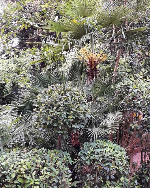 giardino botanico ligustri