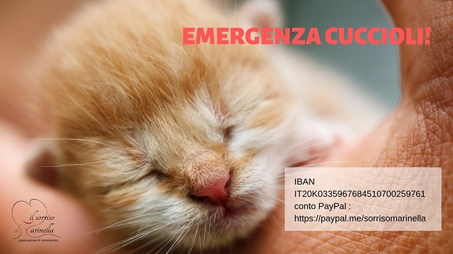 emergenza cuccioli