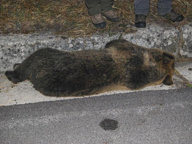 orsa rionero sannitico