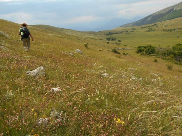 habitat festuca vallese