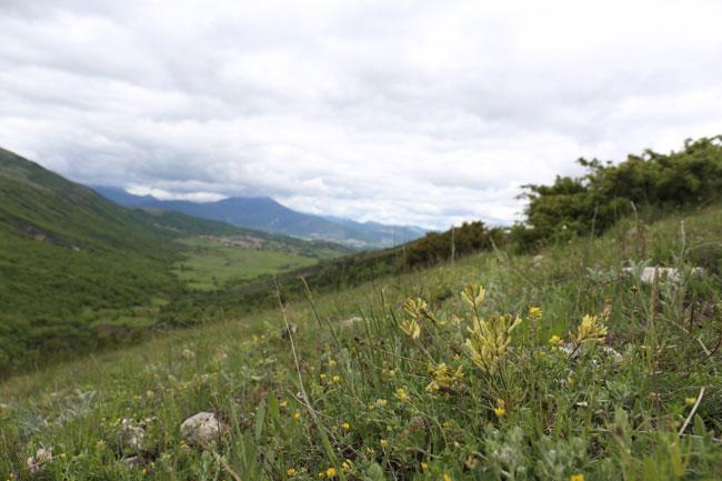 paesaggio specie vegetali Abruzzo