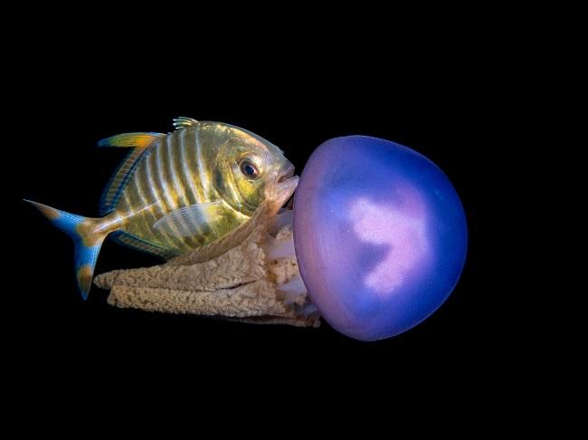 """edizione di """"See in the Sea International Underwater Photocontest OrtonAmare 2019"""""""