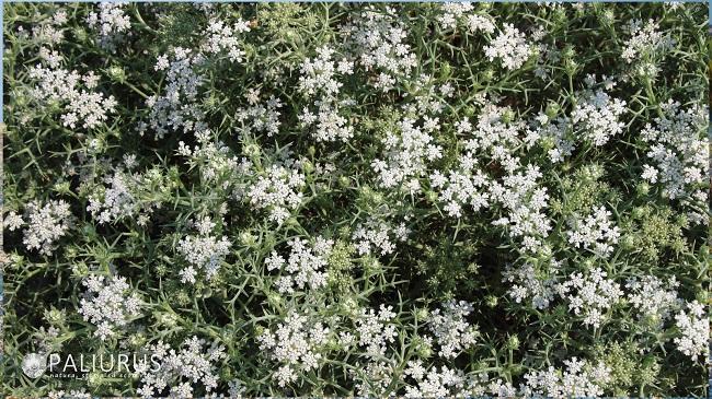 nord_pineto_giardino_botanico_naturale_2