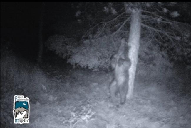 orso notte