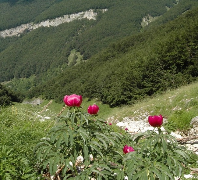 flora majella