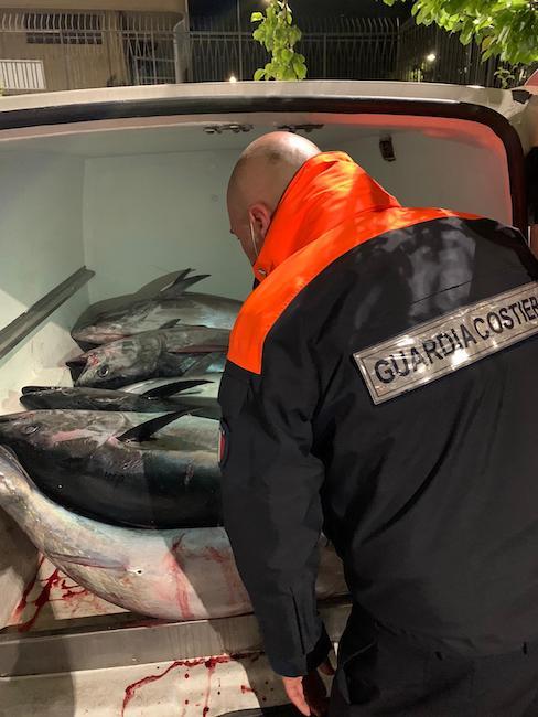 sequestro tonno rosso