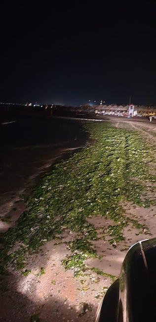 alghe notte